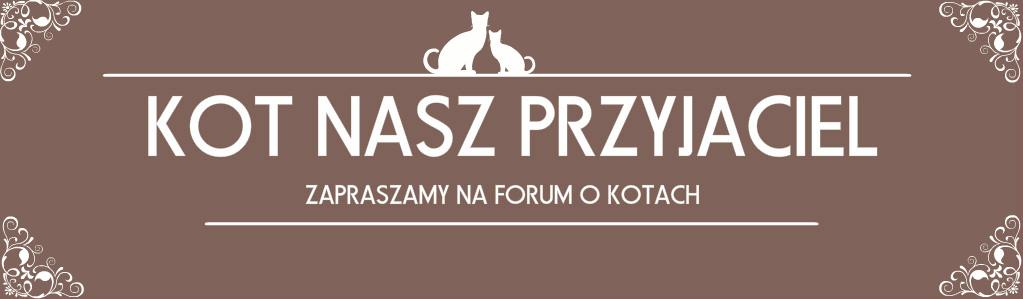 Forum Kot Nasz Przyjaciel Strona Główna